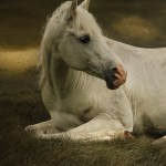 Cute Wallpapers Of Horses 1894728 Hd Wallpaper Backgrounds Download