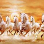 Beautiful White Horses 7 White Horses Running 281788 Hd Wallpaper Backgrounds Download