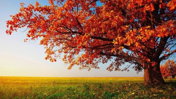 10 Leaf Wallpaper Abyss - Desktop Wallpaper Hd Widescreen ...
