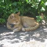 Pet Food Recall Resources