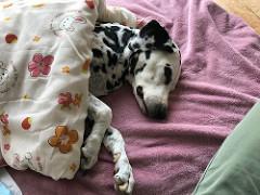 熟睡中のオッド