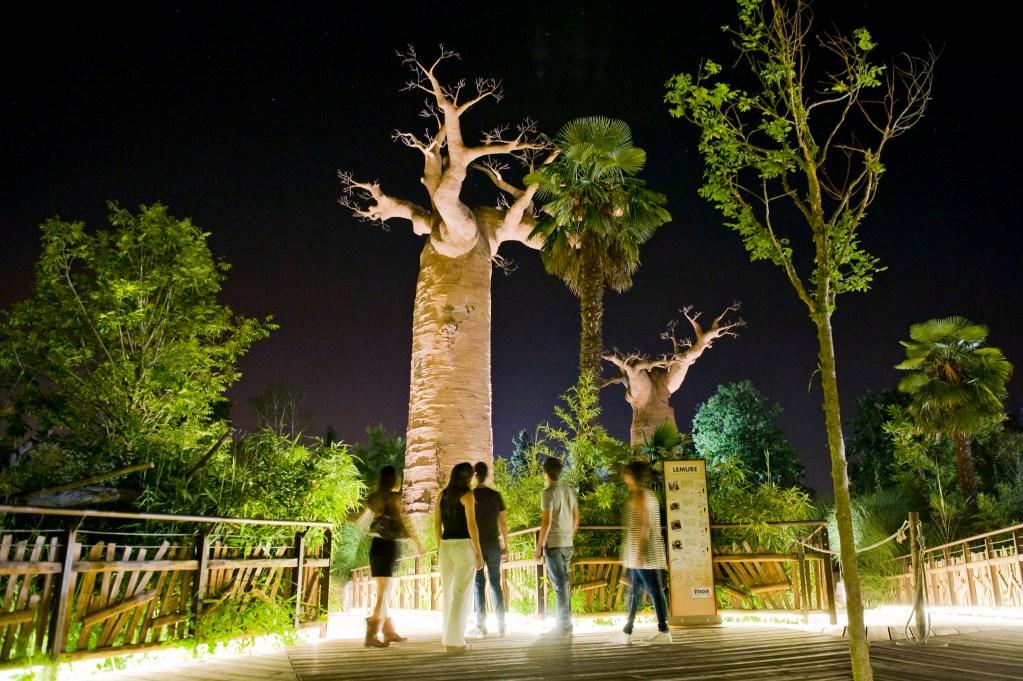 """Zoom Torino: al via """"Night Safari"""""""