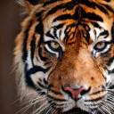 Parco Safari delle Langhe: riapertura da domani 27 maggio