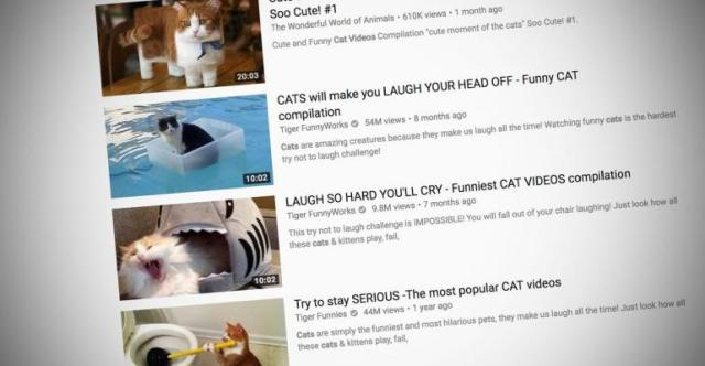 Image result for youtube cat videos