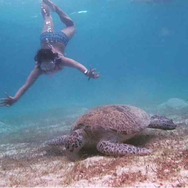 screenshots of swimming with a seaturtle in portBarton palawan Ihellip