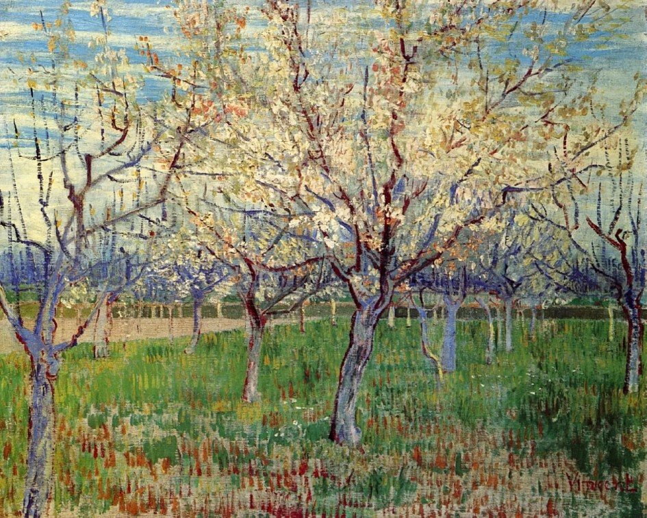 Orchard with Blossoming Apricot Trees - Van Gogh Art