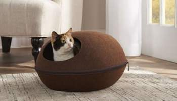 Cat-Warming-Pod