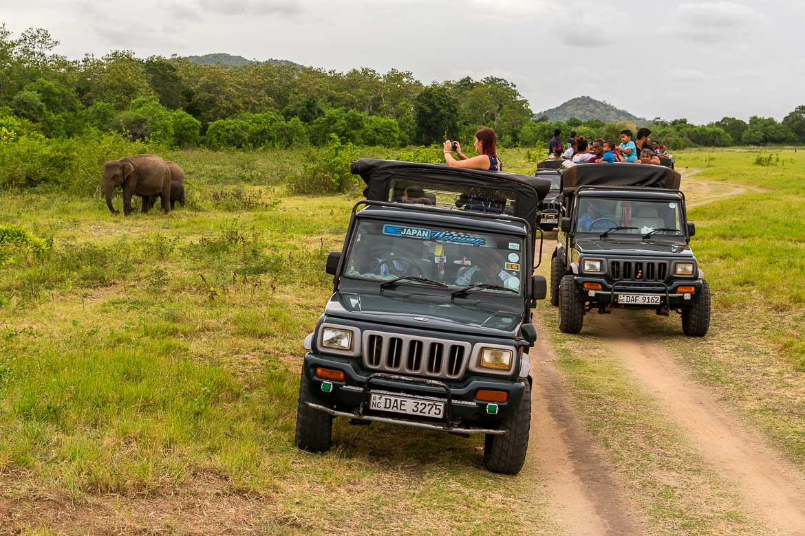This photo shows 2 jeeps at Minneriya National Park. Passengers are taking photographs of some elephants near the jeeps.