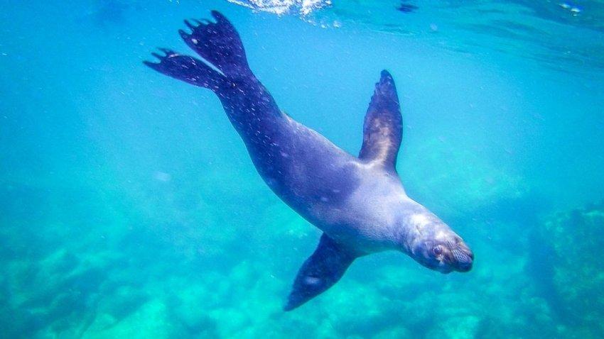 sea lions swimming near us