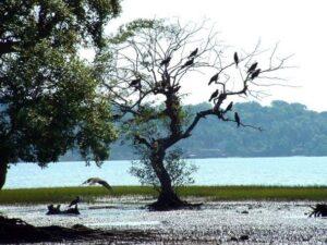salim_ali_bird_sanctuary-min