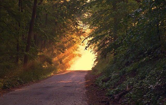 https://pixabay.com/en/sunlight-forest-way-path-evening-166733/