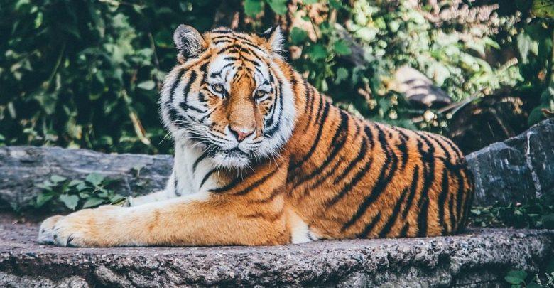 Mhadei Tiger Reserve