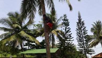 Photo of Volley of tennis in Goa Parliament finally ends with Coconut Palm