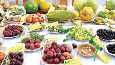 Photo of 'Fruitfully Yours' – The Konkan Fruit Festival 2018; 'Best Fruit Forward'