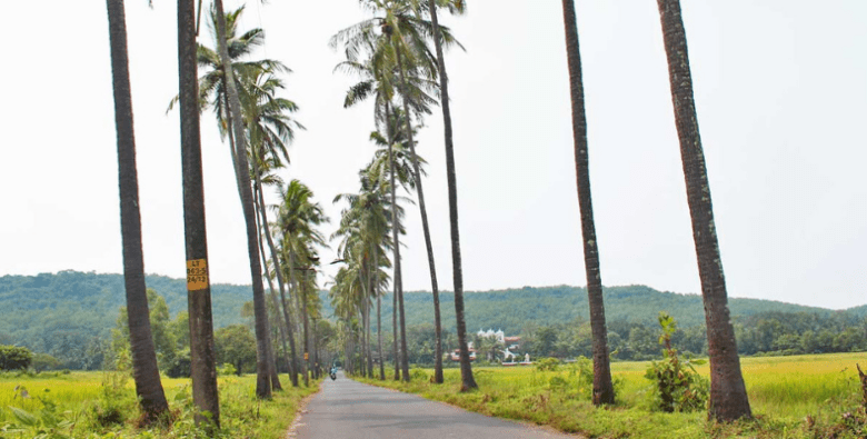 Coconut Palm is the State Heritage Tree of Goa