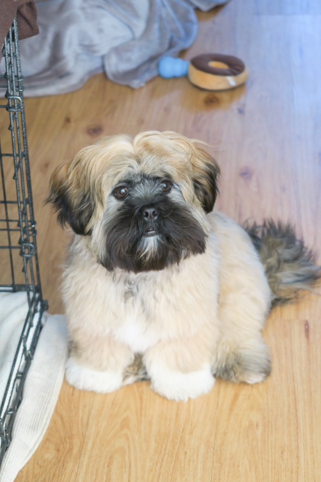 Teddy's 5 and 6 Month Puppy Update
