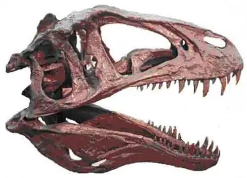 Acrocanthosaurus Skull e1286031149657 Acrocanthosaurus
