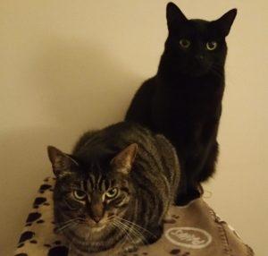 cat family portrait
