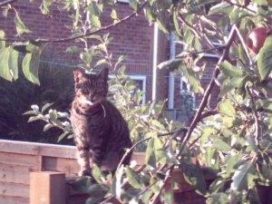 cat of the neighbourhood