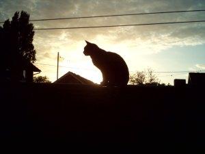 tiggy silhouette