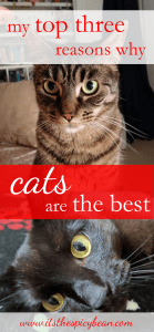 top three reasons why cats are the best