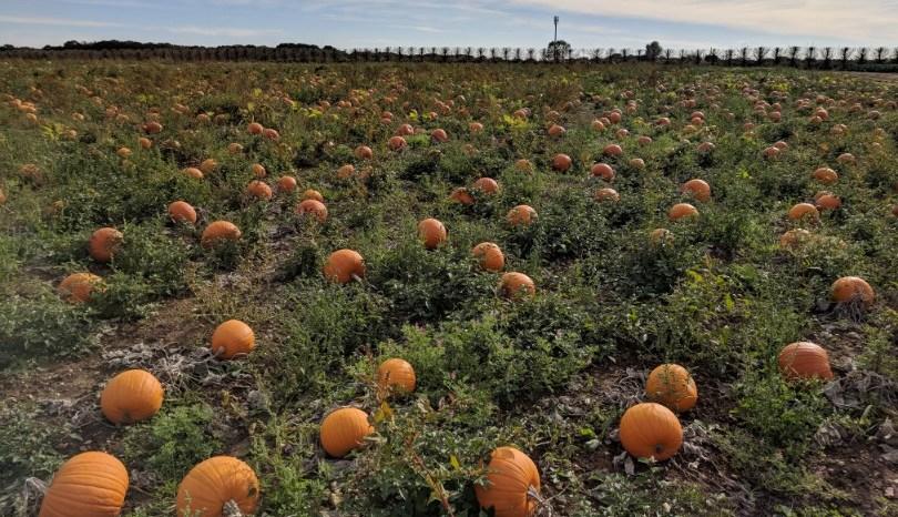 Blogtober Day 7: Visiting the Pumpkin Patch