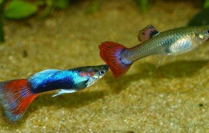 4 must know before buying a aquarium fish online