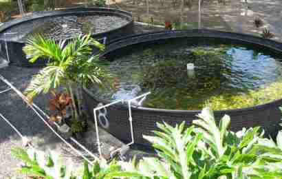 Good Reasons to Try Home Aquaponics