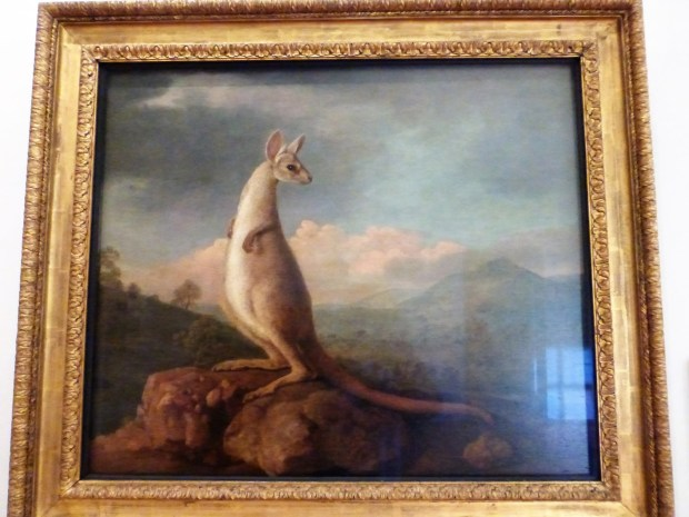 Painting of a kangaroo by Stubbs who had never seen one!