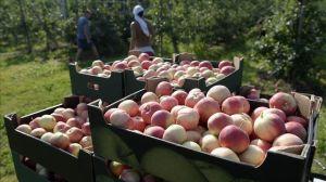 frutas campo