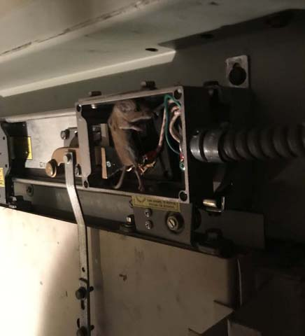 L10 John H finally caught the rat playing with our door locks.