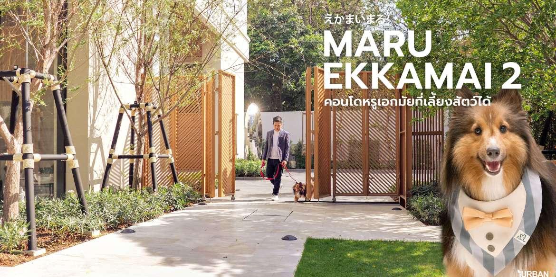 "MARU EKKAMAI 2 รีวิวคอนโดสุดหรู High-Rise แห่งเดียวใน ""เอกมัย"" ที่สัตว์เลี้ยงพักได้ 15 - Major Development PCL"