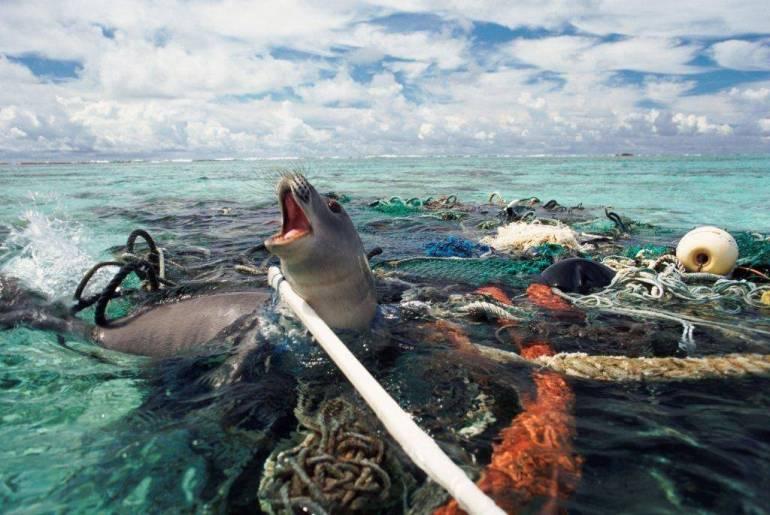 ภัยอันตรายต่อสัตว์น้ำ จากความมักง่ายของมนุษย์บางคน