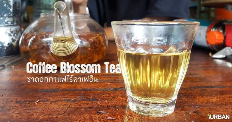 Coffee Blossom tea ชาดอกกาแฟมากประโยชน์ ไร้แทนนินและคาเฟอีน 13 - blossom