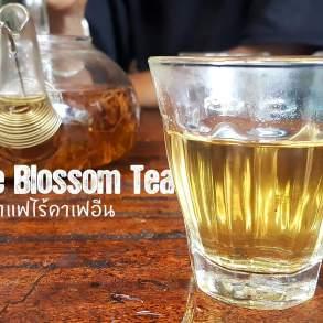 Coffee Blossom tea ชาดอกกาแฟมากประโยชน์ ไร้แทนนินและคาเฟอีน 17 - blossom