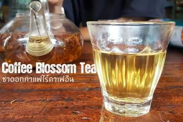 Coffee Blossom tea ชาดอกกาแฟมากประโยชน์ ไร้แทนนินและคาเฟอีน 11 - blossom