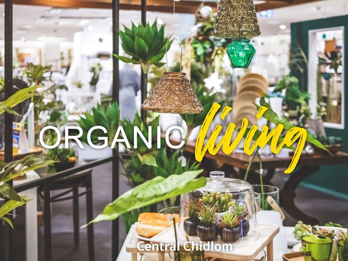 homebasics organicliving central 1 8 วิธีตกแต่งบ้านให้ดูธรรมชาติแบบ Organic Living