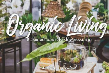 8 วิธีตกแต่งบ้านให้ดูธรรมชาติแบบ Organic Living 6 - decorate