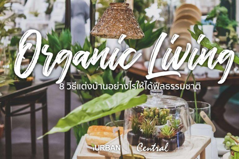 8 วิธีตกแต่งบ้านให้ดูธรรมชาติแบบ Organic Living 21 - ตกแต่งบ้าน