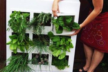 สวนผักแนวตั้งในคอนโด 16 - GREENERY