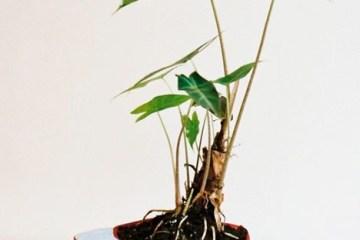Plant Apparel..มาปลูกต้นไม้ในของใช้ใกล้ตัวกัน 16 - DIY