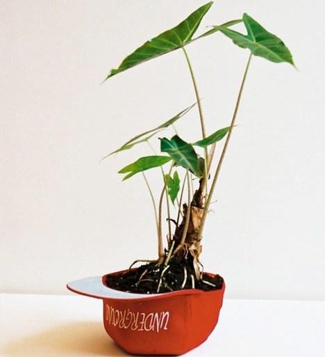 Plant Apparel..มาปลูกต้นไม้ในของใช้ใกล้ตัวกัน 30 - GREENERY