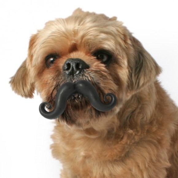 น้องหมามีหนวด }: 15 - หมา