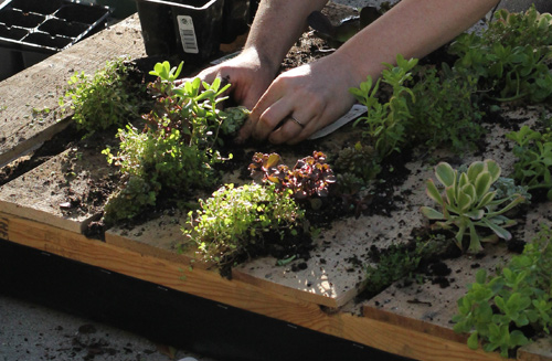 DIY. RECYCLED PALLET สู่สวนแนวตั้ง 23 - DIY