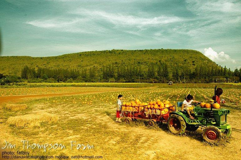 Into the JimThompson Farm 13 - Farm