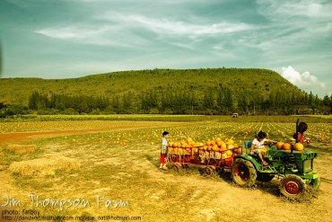 Into the JimThompson Farm 14 - Farm