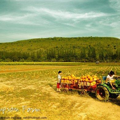 Into the JimThompson Farm 21 - Farm