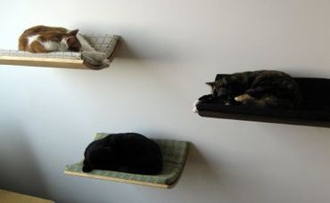 Floating Pet Beds ที่นอนลอยหนีน้ำท่วมสำหรับสัตว์เลี้ยง 23 - pet