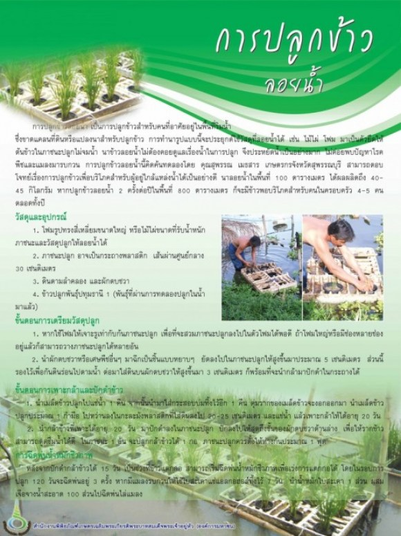 มาปลูกข้าวไทยลอยน้ำกันเถอะ 15 - Thai rice