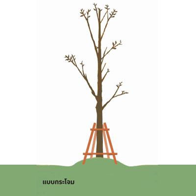 m garden 01 02 ช่วยชีวิตต้นไม้..หลังน้ำท่วม